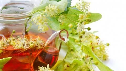 Липа: польза и вред, лечебные свойства, как выглядит, состав и применение