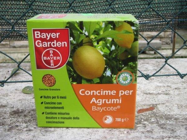 Какие удобрения нужны для цитрусовых и как их вносить?