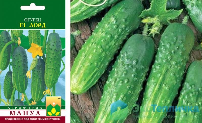 Выращивание огурцов, сорт «кураж f1»
