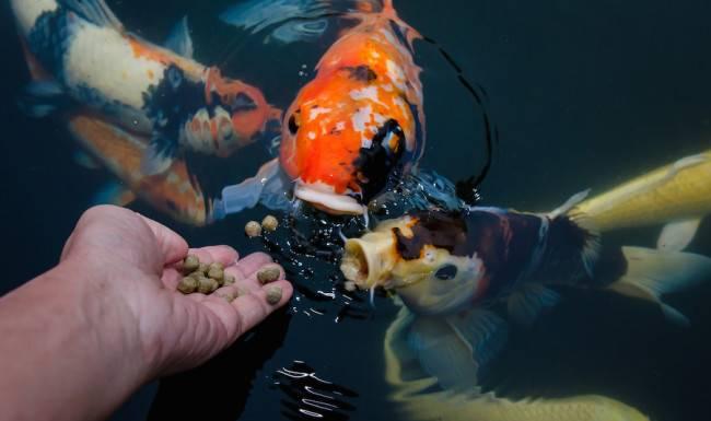 Корм для аквариумных рыб: виды, состав, как выбрать?