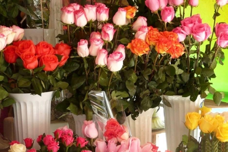 Черенкование роз в стаканчиках — зимний питомник роз на подоконнике