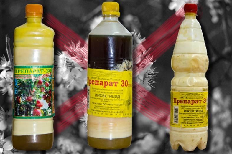 Препарат «регент» – это спасение растений и дома от насекомых-вредителей