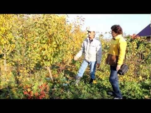 Чем и как подкармливать плодово-ягодные деревья