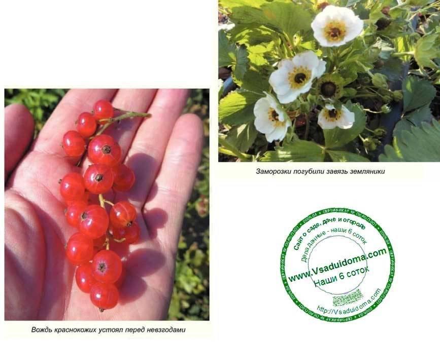 Спасаем цветущие плодовые деревья от весенних заморозков