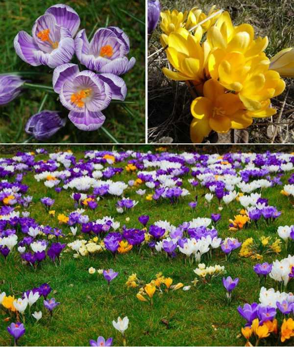 Пересадка многолетних цветов когда. пересадка многолетних цветов на клумбах приусадебных участков