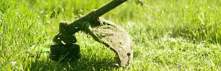 Газонная трава: какая лучше для посева на даче