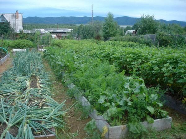 Обустройство огородного участка по курдюмову