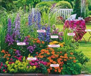 Цветы для клумбы — самые лучшие (100 фото)