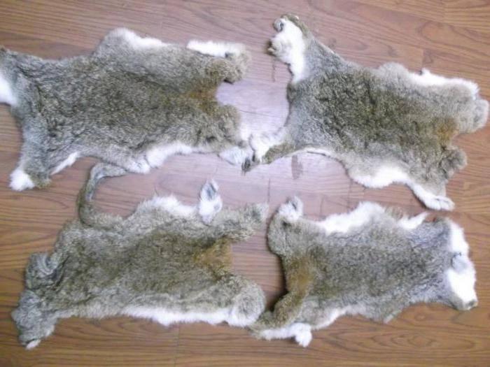 Как выделать шкуру кролика?