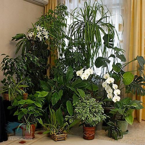 Зимний сад своими руками или как сделать отличную оранжерею у себя дома при минимальных затратах