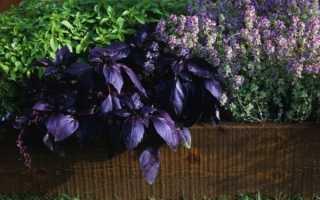 А у вас растут на даче растения отпугивающие насекомых?