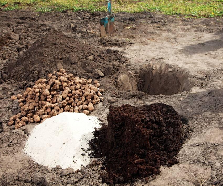 Пересадка пионов осенью: как правильно выкопать куст, поделить и посадить на новое место