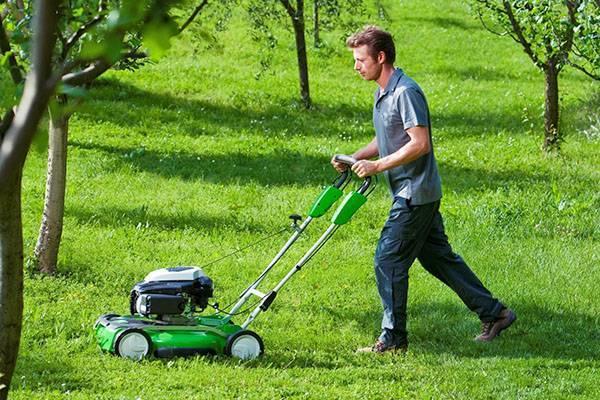 Подготовка газона к зиме: что делать осенью, чтобы газон хорошо перезимовал