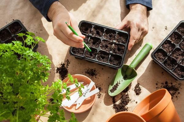 Что сажать в январе на рассаду — 16 растений, которые можно посеять уже сейчас.