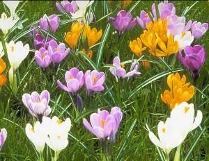 Рекомендации огородникам, как правильно посадить топинамбур весной