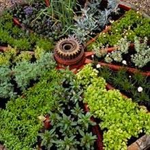 Применение растений против муравьев