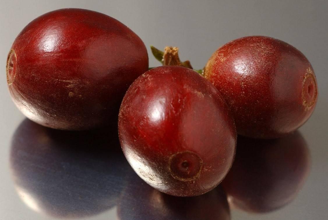 Характеристика и описание картофеля «киви». выращивание сорта и уход за ним