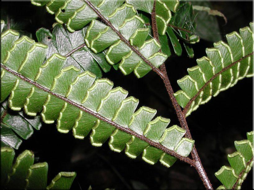 15 необычайно красивых сортов шиловидных флоксов