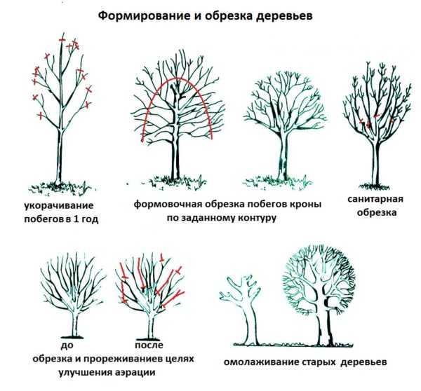Колоновидные яблони — посадка и уход за деревом