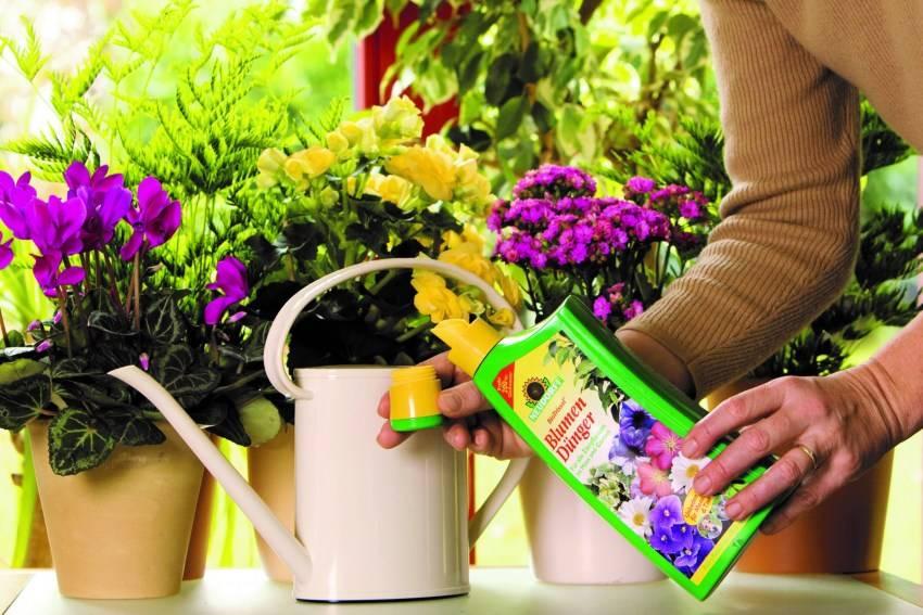 Внекорневые и корневые подкормки комнатных растений