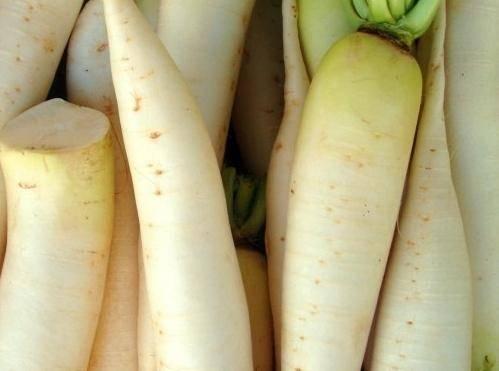 Дайкон: выращивание на огороде
