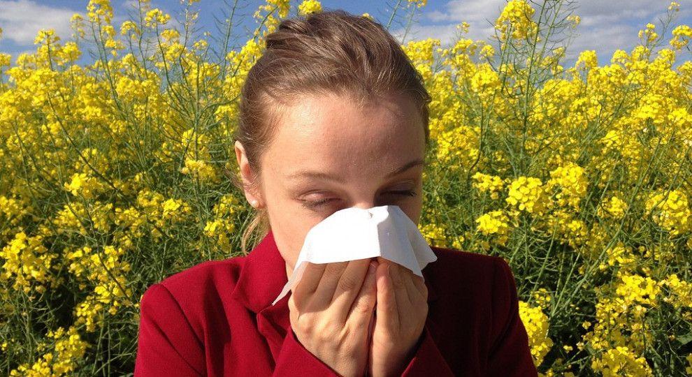Сроки, когда цветёт амброзия. симптомы аллергии на растение