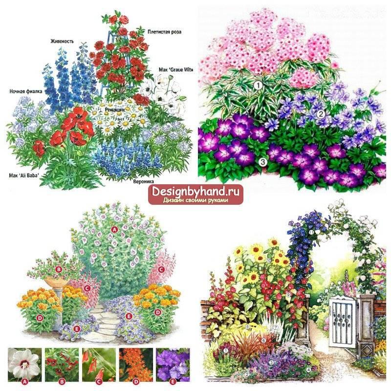 Клумбы из многолетников: схемы посадки с названиями цветов