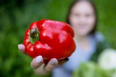 Как правильно сажать перец на рассаду и вырастить качественную рассаду
