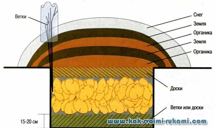 Полезно знать каждой хозяйке: сроки хранения картофеля
