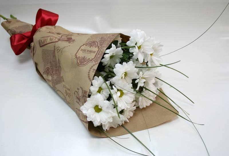 Черенкование хризантем, эффективный метод размножения любимого сорта