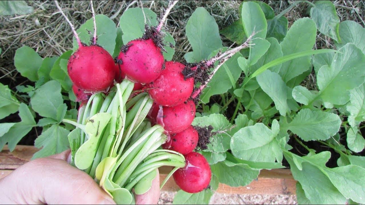 Что можно сажать под зиму – список огородных растений с названиями сортов