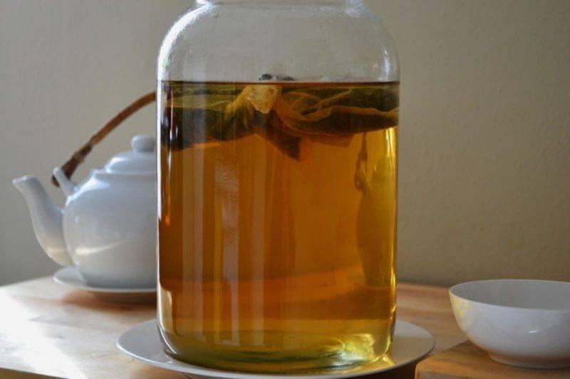 Как вырастить чайный гриб с нуля самостоятельно