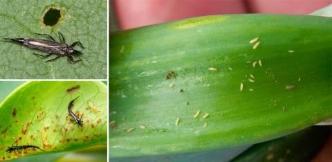 Щитовка на комнатных растениях: как бороться, фото, особенности и причины появления