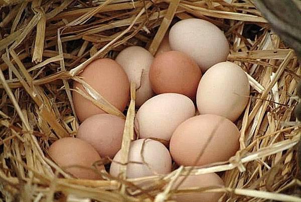 Секреты выгодного выращивания кур: выбор несушек на зимовку, нюансы зимнего кормления