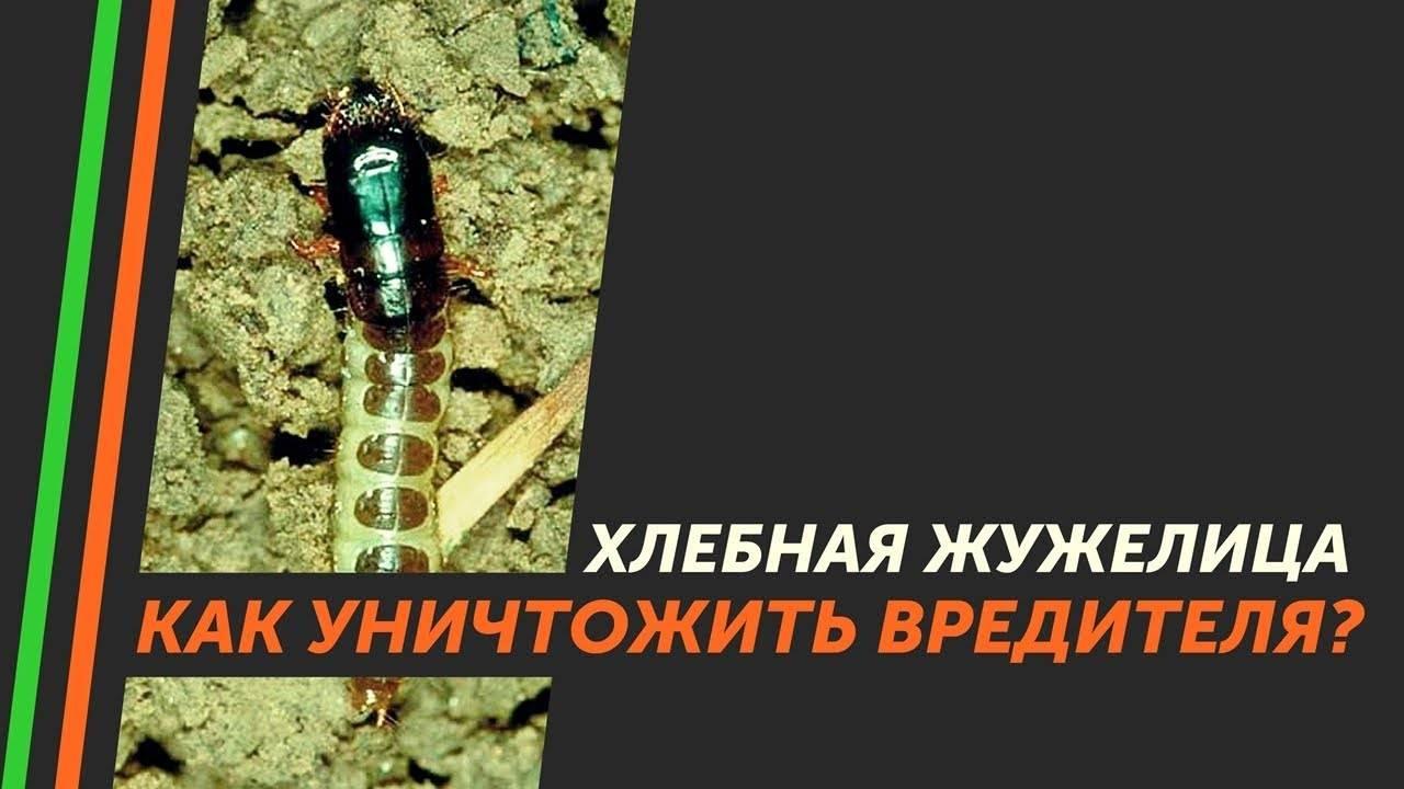 Насекомые-энтомофаги для защиты растений от вредителей