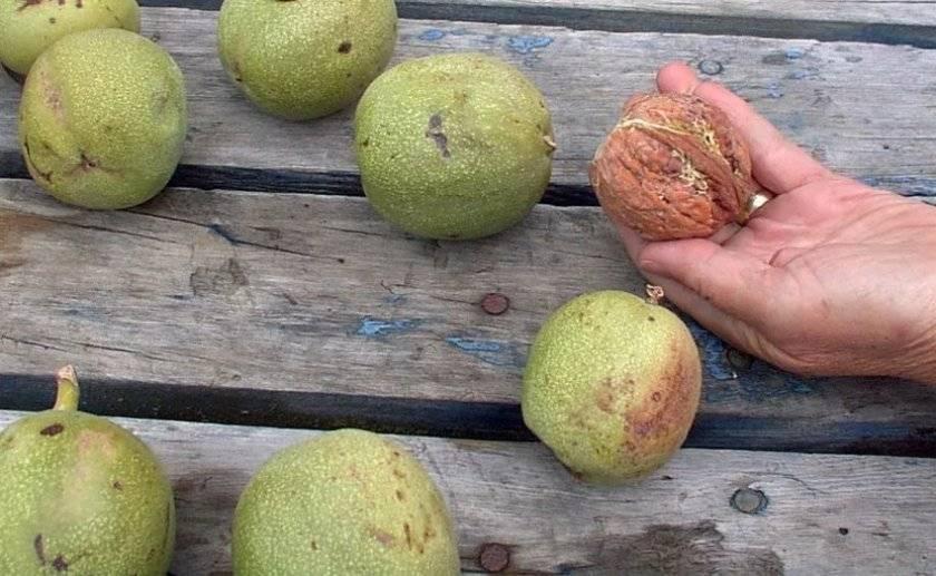 Самые крупноплодные сорта неремонтантной клубники