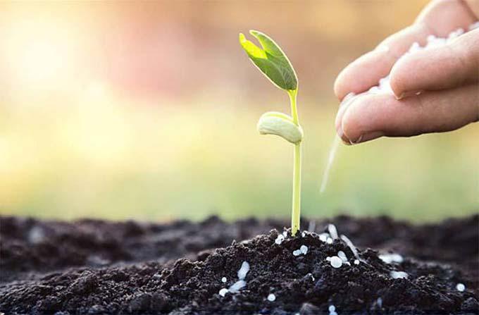 Топ самых полезных удобрений необходимых для огорода весной