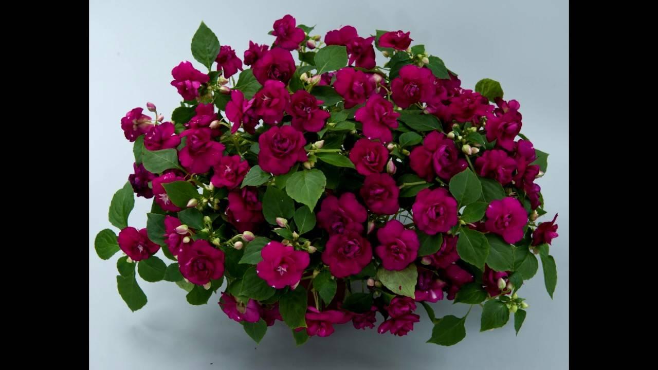 Уход за цветами: полив, удобрения, прополка и рыхление почвы уход за цветами: полив, удобрения, прополка и рыхление почвы