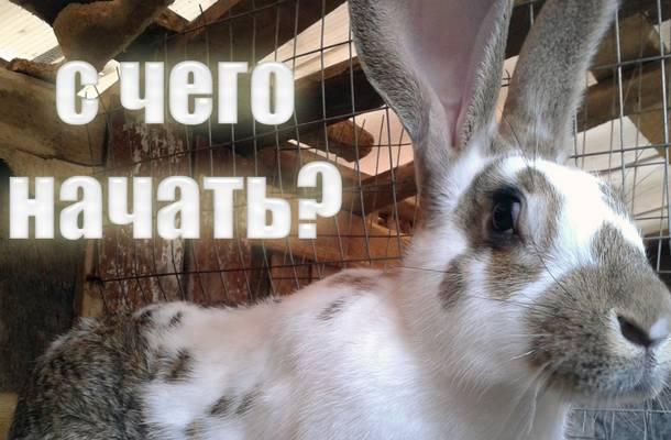Выгодно или нет разведение кроликов на ферме как бизнес