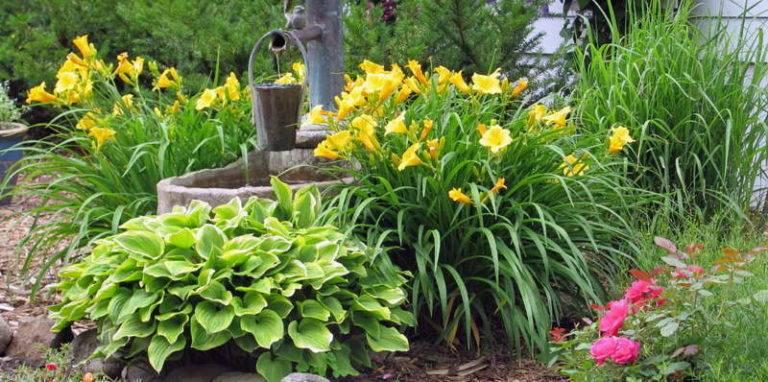 Сажаем лилейник весной
