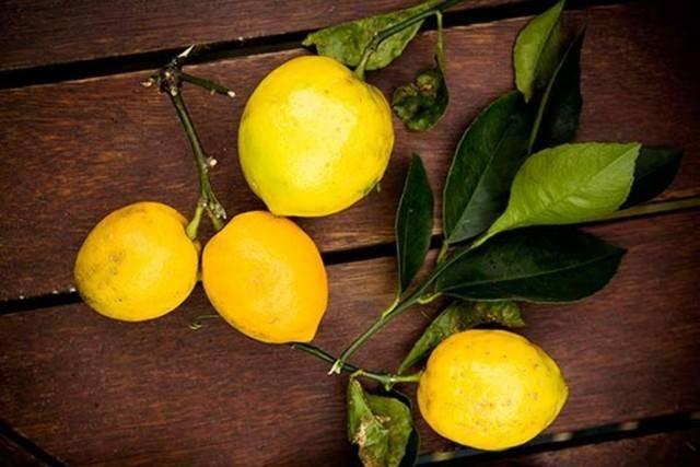 Как привить лимонное дерево дома