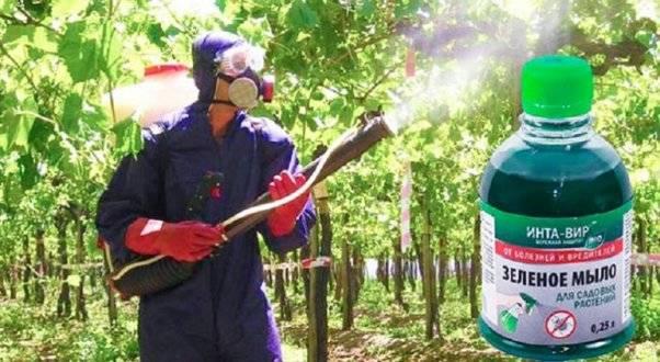 10 способов применения хозяйственного мыла в саду и огороде