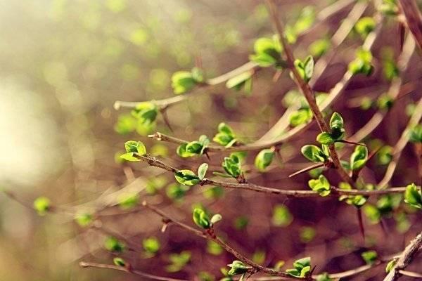 Все о вегетационном периоде растений: сроки, методы воздействия и ускорения