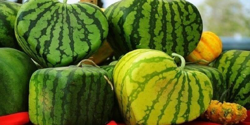 Ягода, фрукт или овощ — арбуз