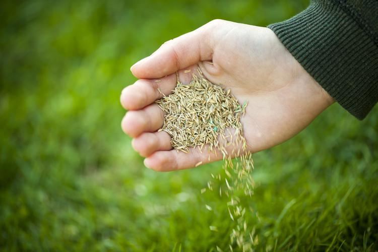 Как выбрать газонную траву для дачи: особенности выбора