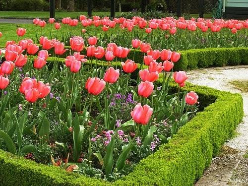 Обзор растений для посадки живой изгороди