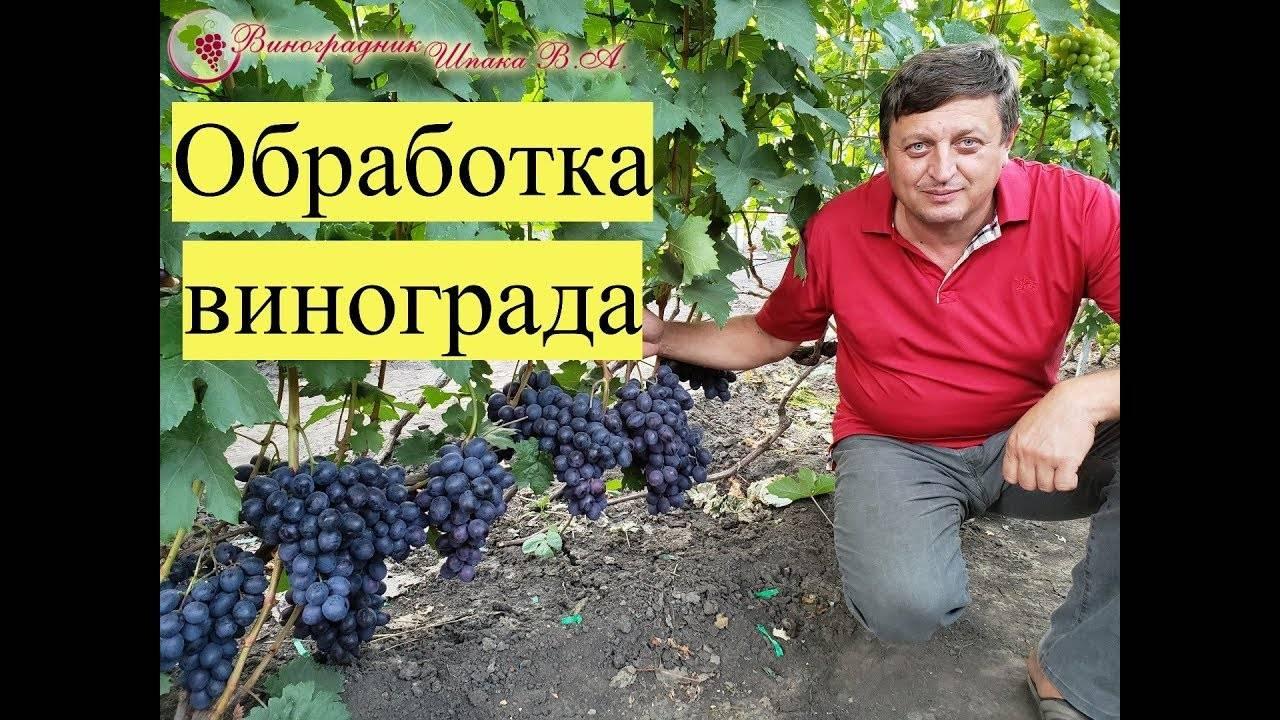 Дикий виноград: уход и посадка, размножение в домашних условиях
