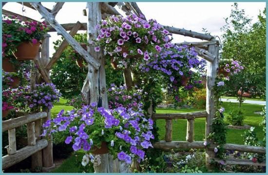 Ампельная ипомея — лиственно-декоративное растение