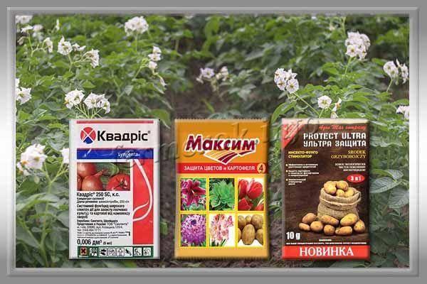 Картофель сорта Киви происхождение, описание, выращивание, видео