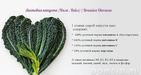 Капуста листовая кале или кейл как выращивать из семян на рассаду посадка и уход в открытом грунте